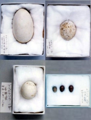 https://www.hitohaku.jp/exhibition/planning/birds-specimen2021_fig3.jpg