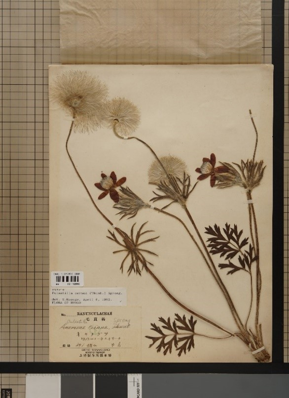 https://www.hitohaku.jp/exhibition/planning/shoei-herbarium2020_photo3.jpg