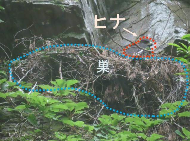 https://www.hitohaku.jp/research/h-research/20200703fnews-picture1.jpg